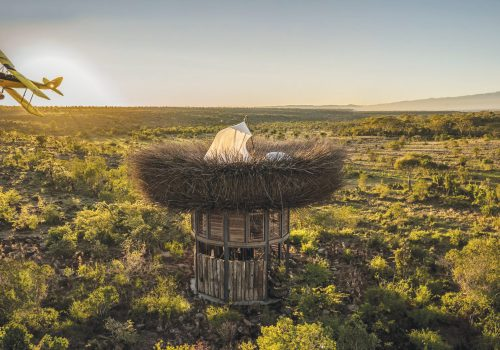 Segera's Nay Palad Bird Nest in Kenya